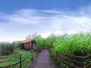 Kawasan hutan mangrove di Jakarta Utara