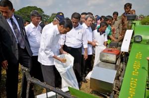 Presiden Jokowi memeriksa hasil panen petani, pada sebuah acara blusukannya, di sebuah daerah, beberapa waktu lalu