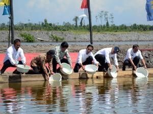 Presiden Jokowi mengambil udang di Kampung Tambak Udang, Vaname, Mamuju Utara, Sulbar, Sabtu (30/5)