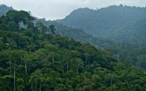 Hutan Kalteng