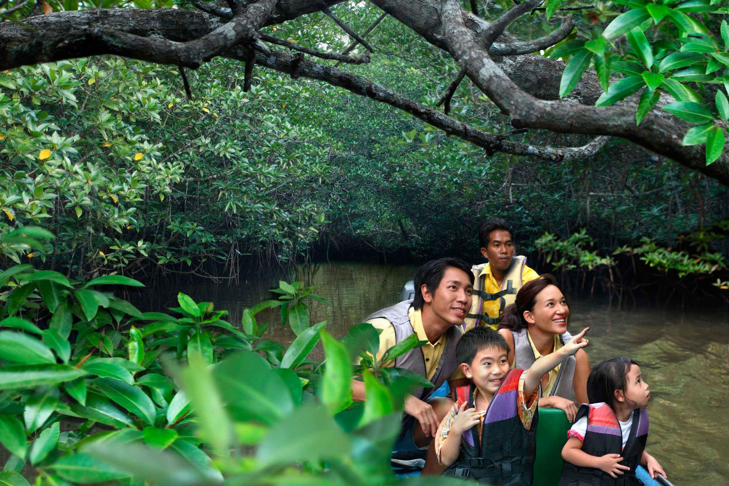 Wisata Mangrove-