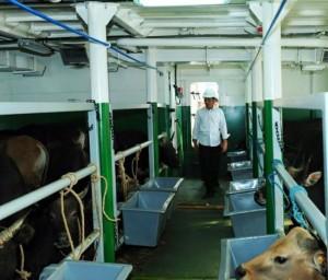 Presiden Jokowi meninjau ke dalam kapal pengangkut sapi KM Camara Nusantara 1, di Pelabuhan Tanjung Priok, Jakarta, Jumat (11/12) sore