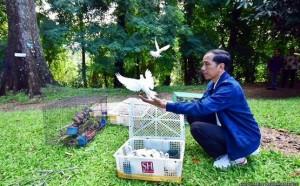 Presiden Jokowi saat melepas burung di Kebun Raya Bogor, Jabar, Minggu (3/1) pagi (Foto:Biro Pers, Media, dan Informasi/Setpres)