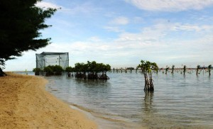 Lokasi Pencanangan Gerakan Nasional Penyelamatan Tumbuhan dan Satwa Liar, di Pulau Karya, Kepulauan Seribu, yang akan dilakukan oleh Presiden Jokowi, Kamis (14/4)
