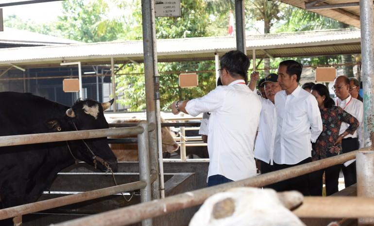 Jokowi Meninjau Peternakan Sapi Rumpin