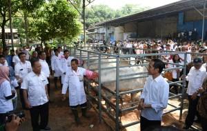 Presiden Jokowi berbincang dengan Menristekdikti, saat meninjau peternakan sapi, di Cibodas, Bogor, Selasa (21/6) siang. (Foto: JAY/Humas)