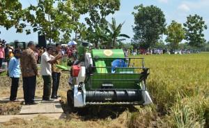 panen raya bersama di Desa Trayu, Kecamatan Banyudono, Kabupaten Boyolali, Sabtu (29/10)