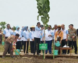 Presiden Jokowi memimpin aksi penanaman 238 ribu pohon secara serentak, di Desa Tasikharjo, Kecamatan Jenu, Kabupaten Tuban, Jawa Timur, Senin (28/11) siang. (Foto: OJI/Humas)