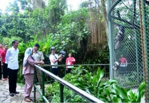 Presiden Jokowi bersama Ibu Negara Iriana berkunjung ke Kebun Binatang Ragunan di kawasan Jakarta Selatan sebagai tempat liburan keluarga, Kamis (29/6). (Foto: BPMI)
