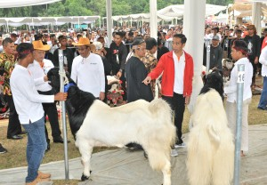 Presiden saat menghadiri Jambore Peternakan Nasional Tahun 2017 di Bumi Perkemahan dan Graha Wisata (Buperta) Cibubur, Jakarta Timur, Minggu (24/9) siang. (Foto: Humas/Jay)
