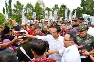 Presiden Jokowi saat melakukan peremajaan tanaman di Desa Panca Tunggal, Kecamatan Sungai Lilin, Kabupaten Musi Banyuasin, Jumat (13/10). (Foto: BPMI)