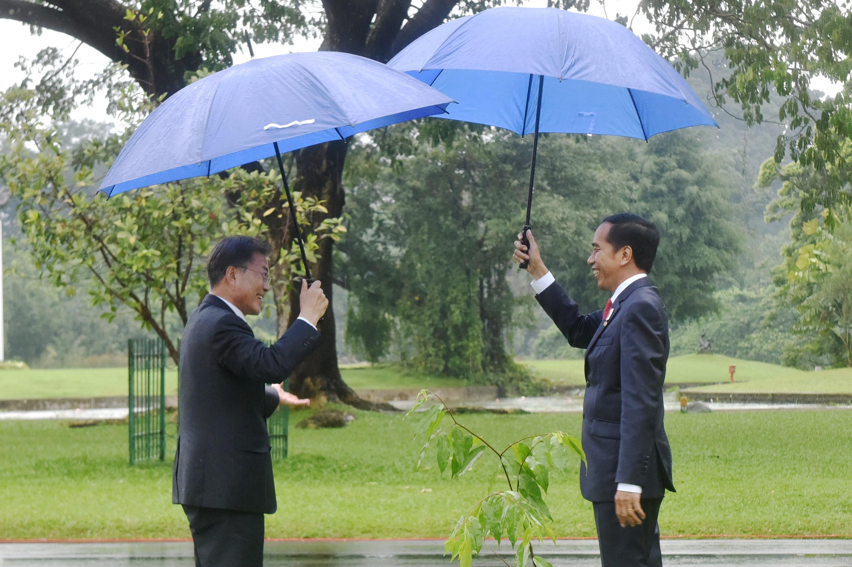 Presiden Jokowi dan Presiden Moon Jae-In usai penanaman pohon di halaman Istana Kepresidenan Bogor, Jawa Barat, Kamis (9/11) sore. (Foto: Humas/Oji).