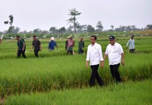 Presiden Joko Widodo (Jokowi) meninjau proyek irigasi di Dukuhlo, Tegal, Senin (15/6). (Foto: Humas/Agung).