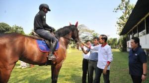 Presiden Jokowi meninjau pelatnas cabang olahraga berkuda, di Arthayasa Stable, Limo, Kota Depok, Jawa Barat, Minggu (6/5) sore. (Foto: Setpres)