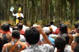 Presiden saat meresmikan program Peremajaan Sawit Rakyat di Provinsi Riau. (Foto: BPMI)