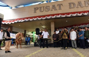 President Jokowi hands over a limousine cattle to PP Muhammadiyah and received directly by Chairman of Central Executive Board of Muhammadiyah Haedar Nashir, at office of Central Executive Board (PP) of Muhammadiyah, Jakarta, on Thursday (23/8). (Photo by: Jay/Public Relations).