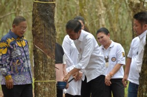 President Jokowi meets with South Sumatra's Rubber Farmers, at the Rubber Research Center, Sembawa Research Center, Banyuasin Regency, Saturday (9/3). (Photo by: Oji/ PR)