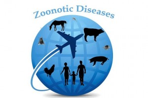 Zoonotic-Disease-765x510